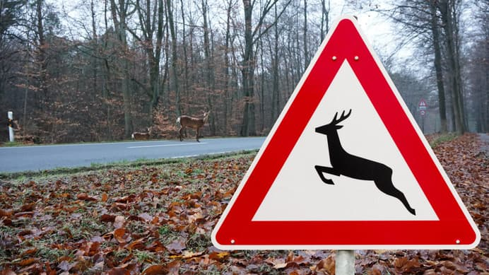 How to Handle a Car Accident Caused by an Animal on the Road